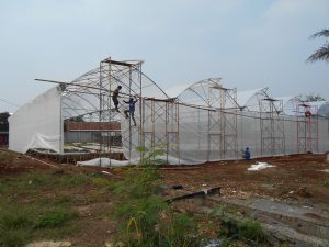 greenhouse_parung1