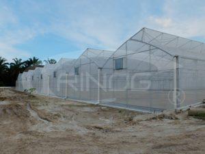 trinog_muskmelon_greenhouse