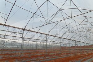 trinog_vegetable_greenhouse2